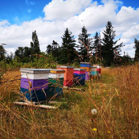 On the Farm: A Bit About Bees